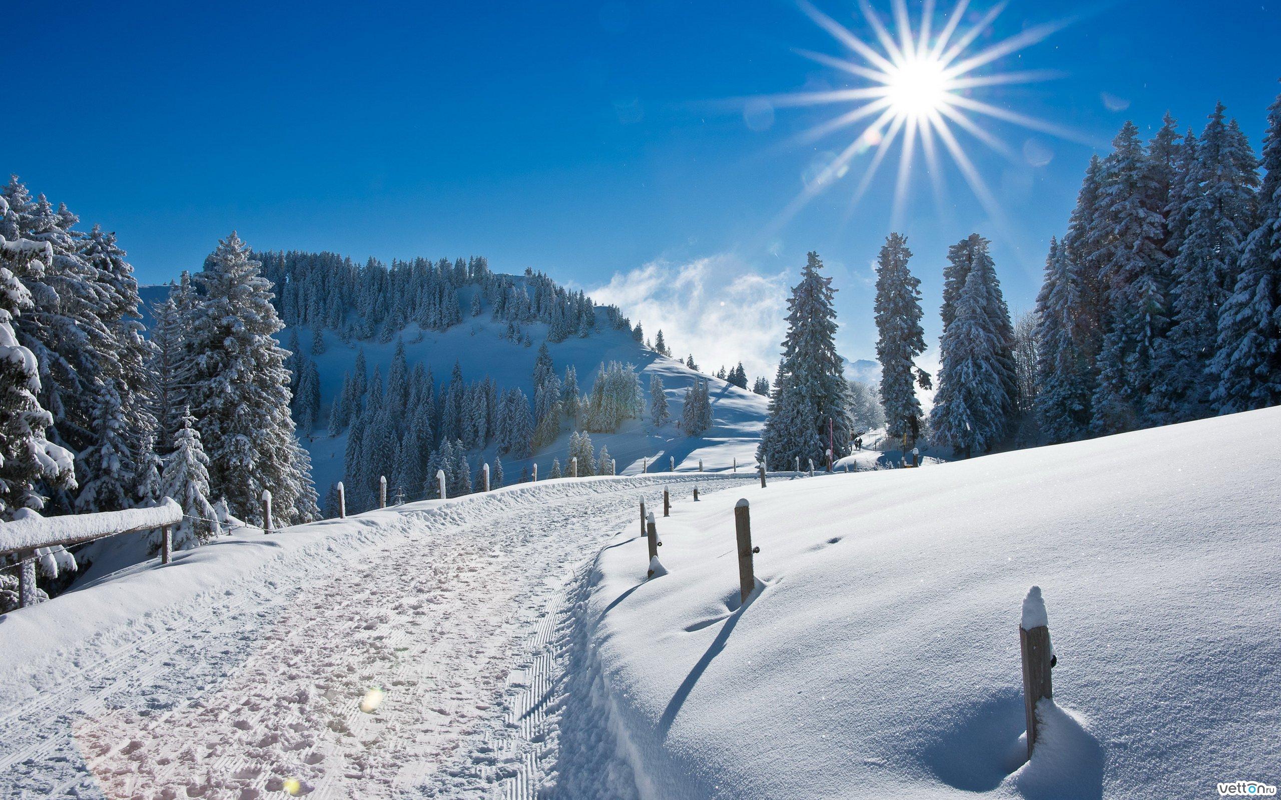 зимний солнечный лес  № 310439  скачать